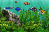 3D Fish School Screensaver 4.994 poster