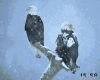 Birds of Prey Free Screensaver 1.0 image 1