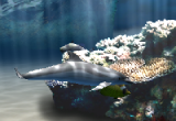 Living Dolphins 3D Screensaver 1.01 poster